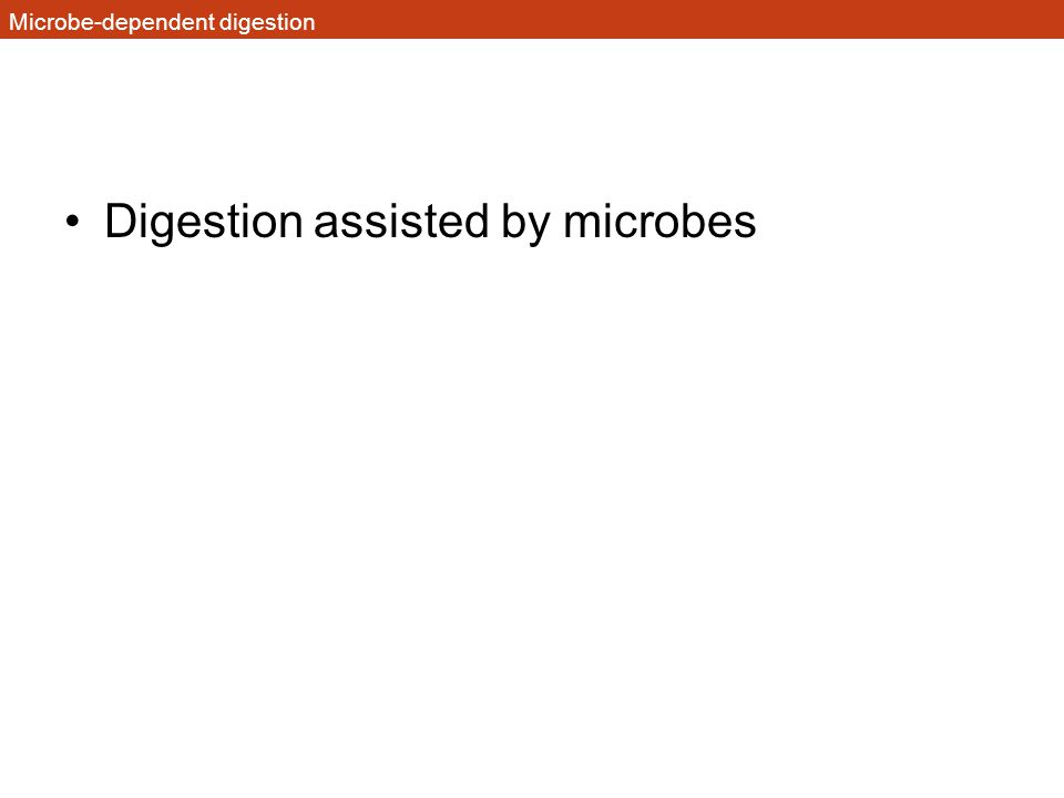 Microbe-dependent digestion Digestion assisted by microbes