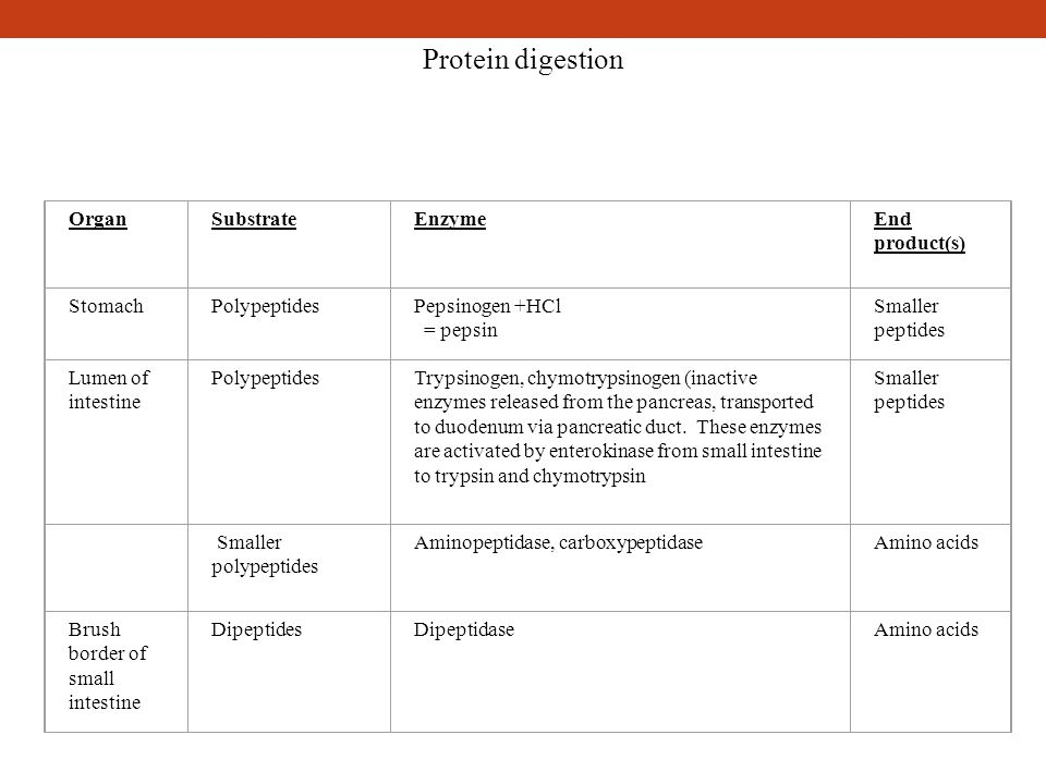 Protein digestion OrganSubstrateEnzymeEnd product(s) Stomach PolypeptidesPepsinogen +HCl = pepsin Smaller peptides Lumen of intestine PolypeptidesTryp