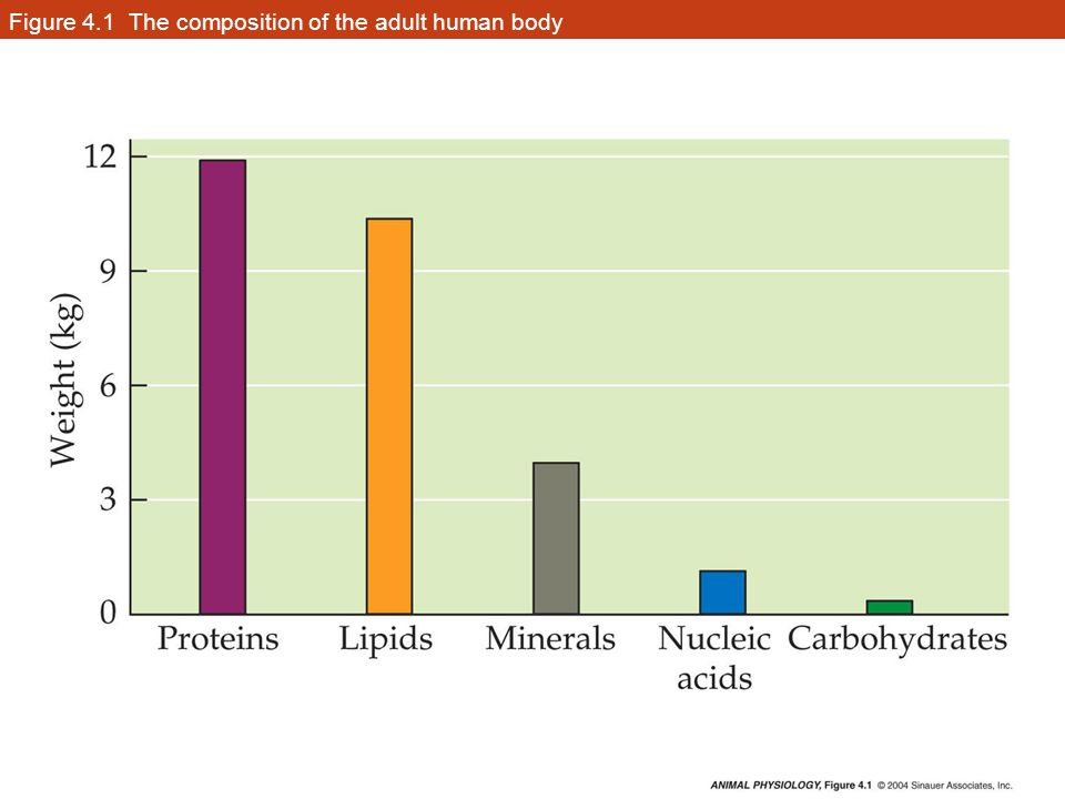 Figure 4.1 The composition of the adult human body