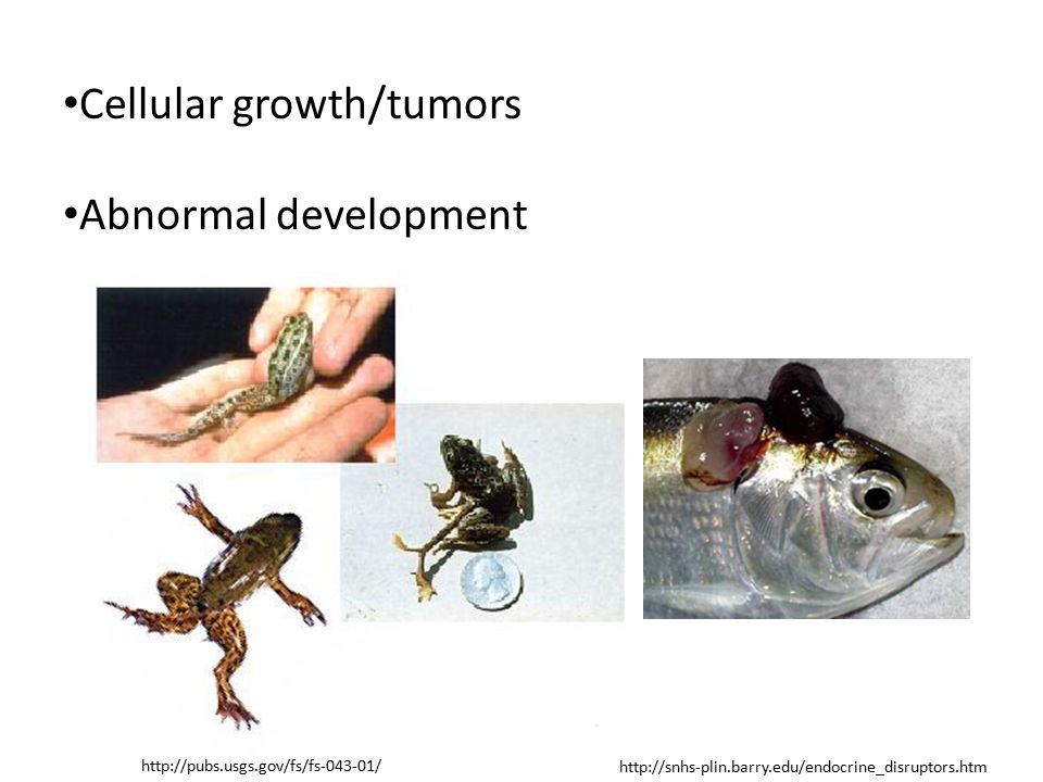Cellular growth/tumors Abnormal development