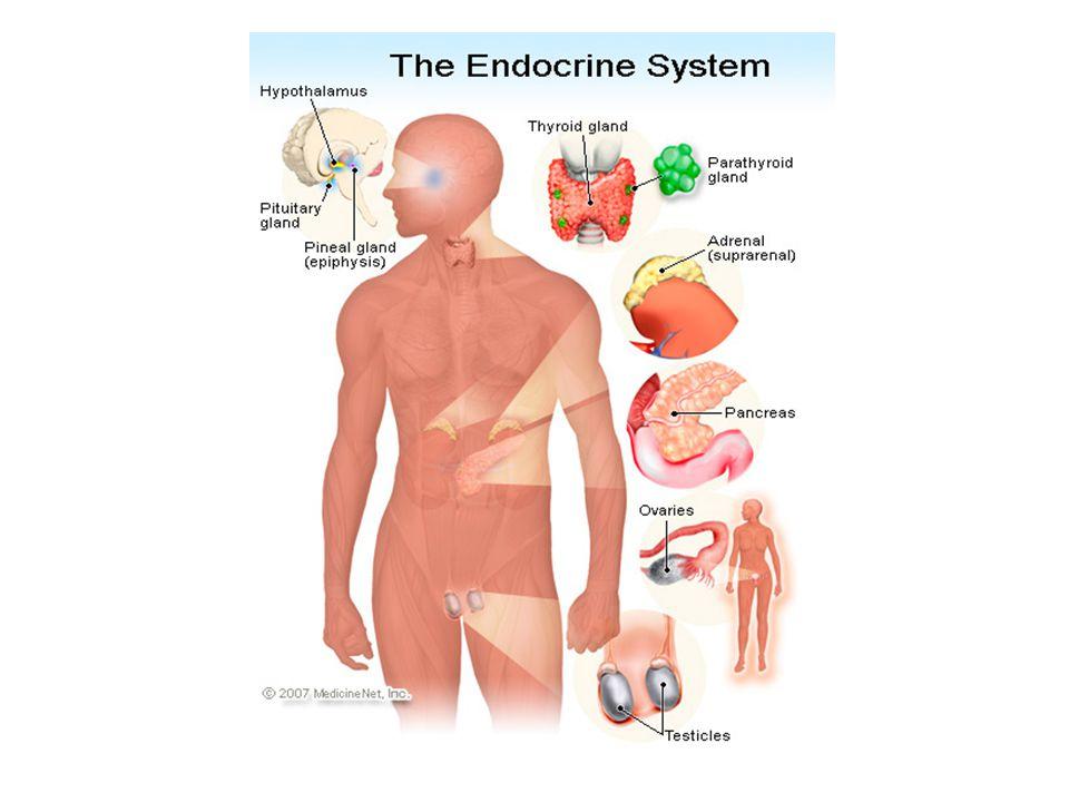 Endocrine Disruptors and Frogs Limb development http://www.epa.gov/ncer/science/endocrine/ pdf/wildlife/r827398_gardiner-030105- final.pdf