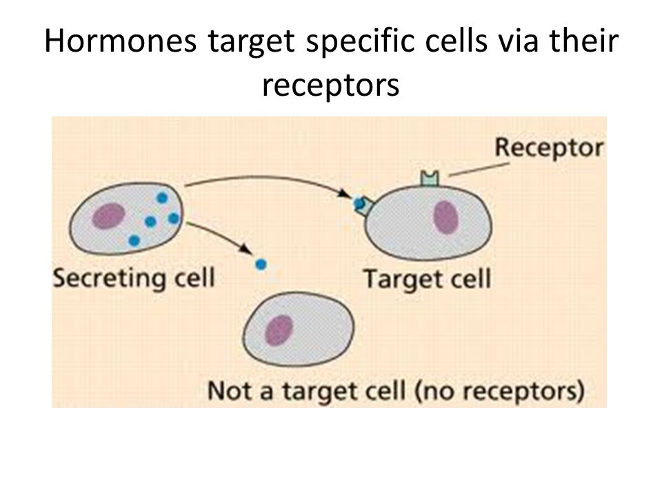 Hormones target specific cells via their receptors