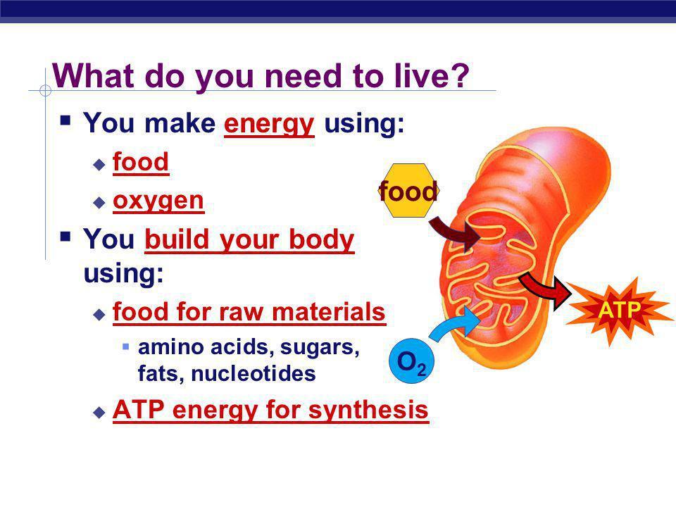 Regents Biology Animal Nutrition Human Digestion