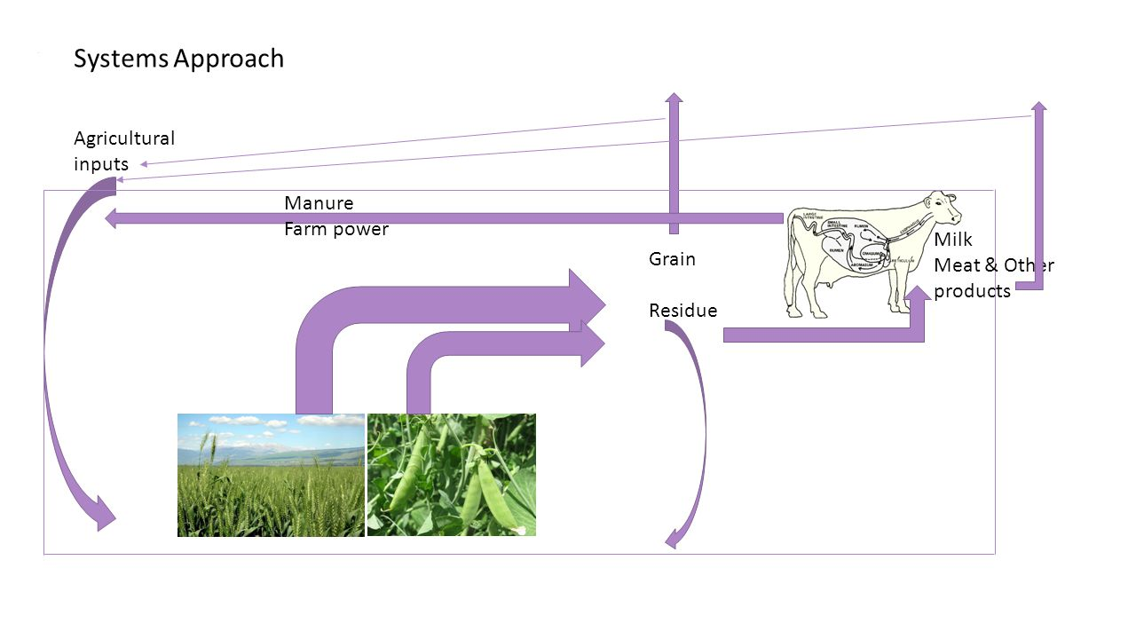 . Agricultural inputs Grain Residue Manure Farm power Milk Meat & Other products Systems Approach