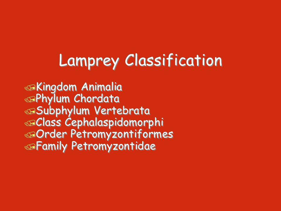 Lamprey Classification / Kingdom Animalia / Phylum Chordata / Subphylum Vertebrata / Class Cephalaspidomorphi / Order Petromyzontiformes / Family Petr