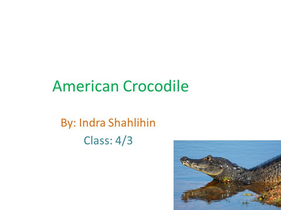 American Crocodile By: Indra Shahlihin Class: 4/3