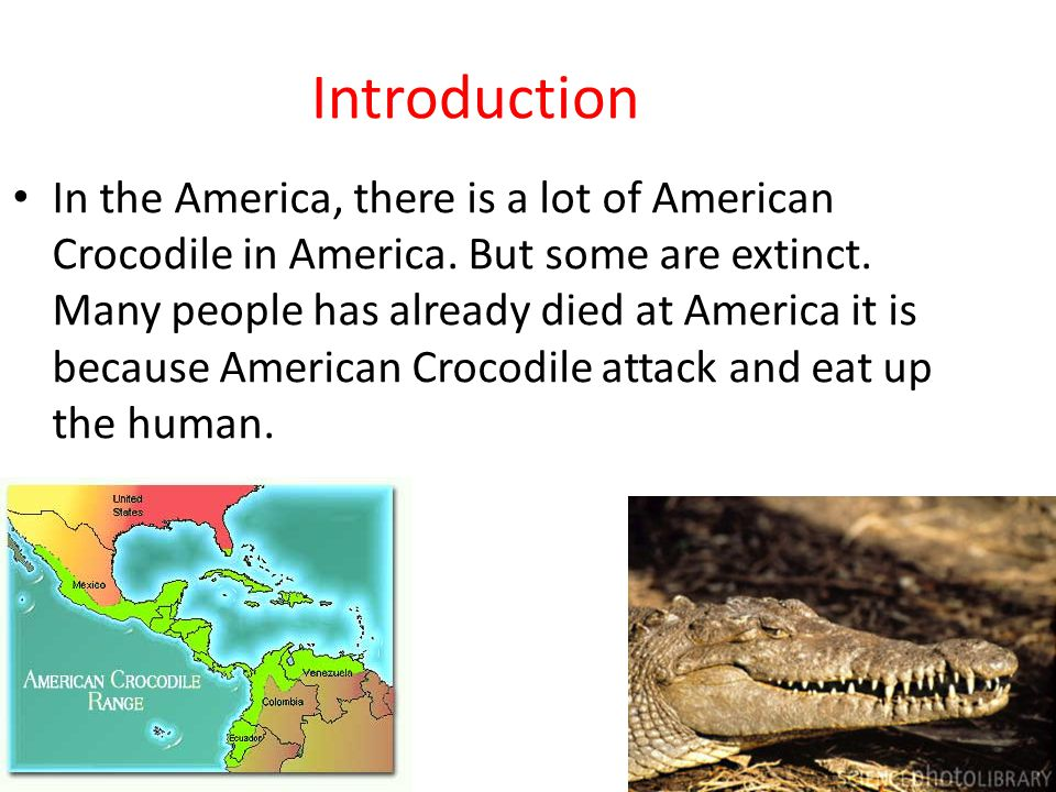 Introduction In the America, there is a lot of American Crocodile in America.