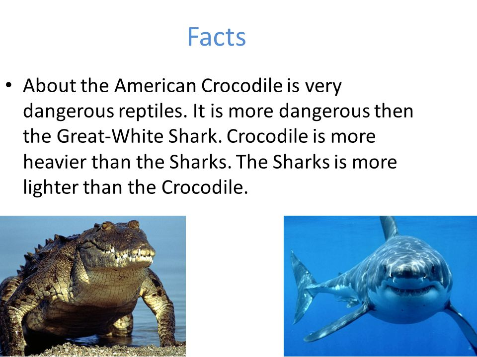 Facts About the American Crocodile is very dangerous reptiles. It is more dangerous then the Great-White Shark. Crocodile is more heavier than the Sha