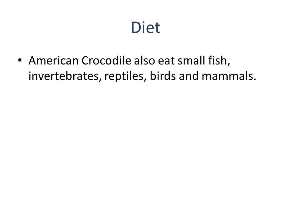 Diet American Crocodile also eat small fish, invertebrates, reptiles, birds and mammals.
