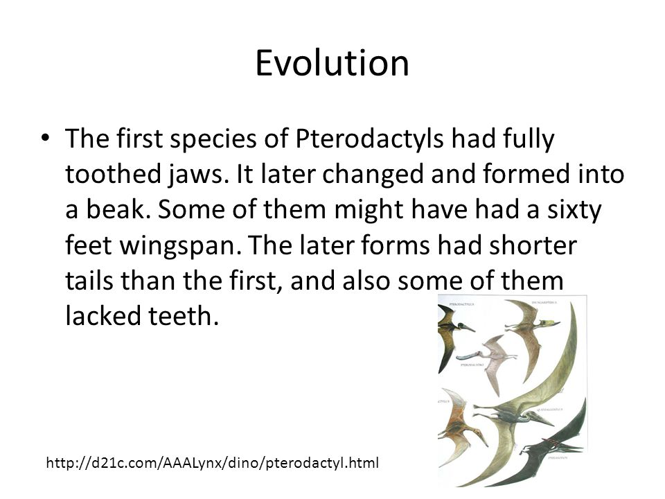 Evolution The first species of Pterodactyls had fully toothed jaws.