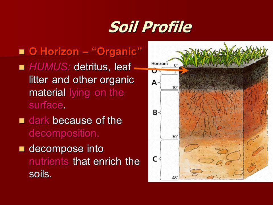 Soil Profile O Horizon – Organic O Horizon – Organic HUMUS: detritus, leaf litter and other organic material lying on the surface.