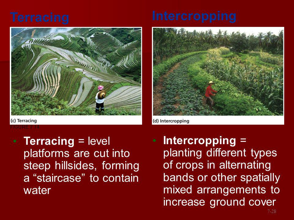 Terracing = level platforms are cut into steep hillsides, forming a staircase to contain water Intercropping = planting different types of crops in al