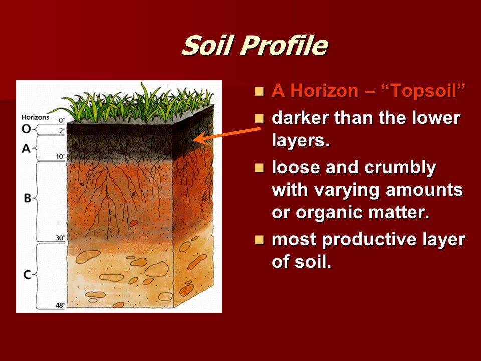 Soil Profile A Horizon – Topsoil A Horizon – Topsoil darker than the lower layers.