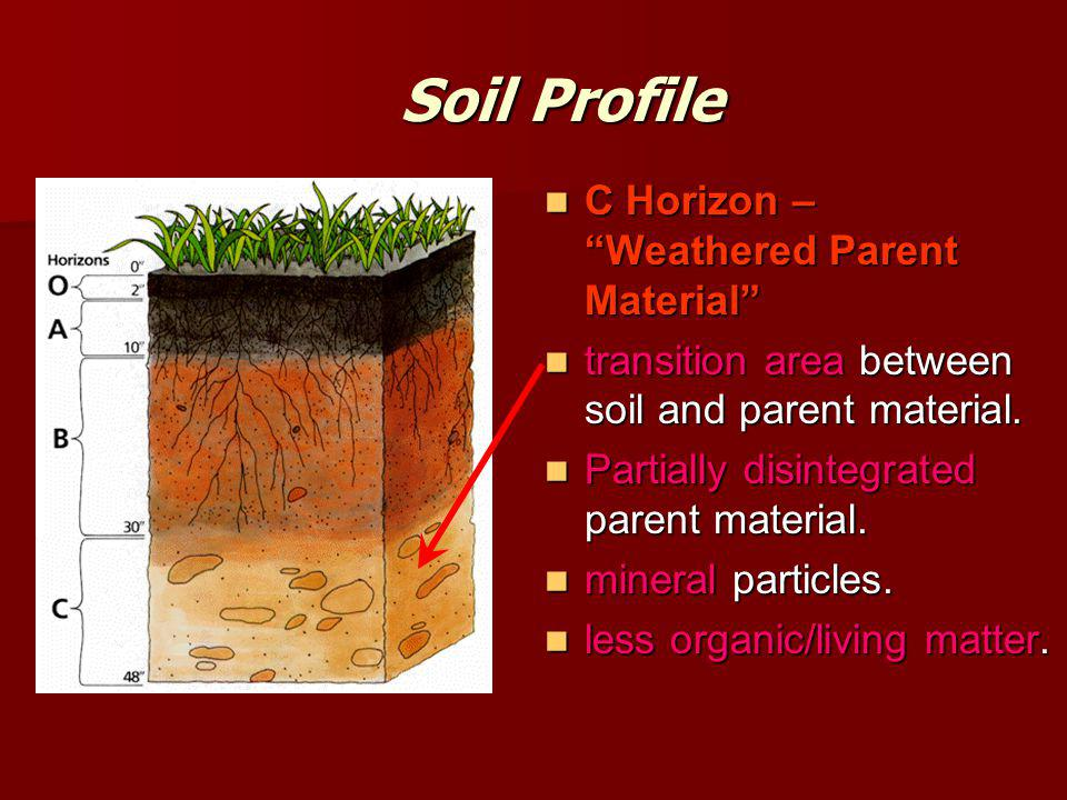Soil Profile C Horizon – Weathered Parent Material C Horizon – Weathered Parent Material transition area between soil and parent material.