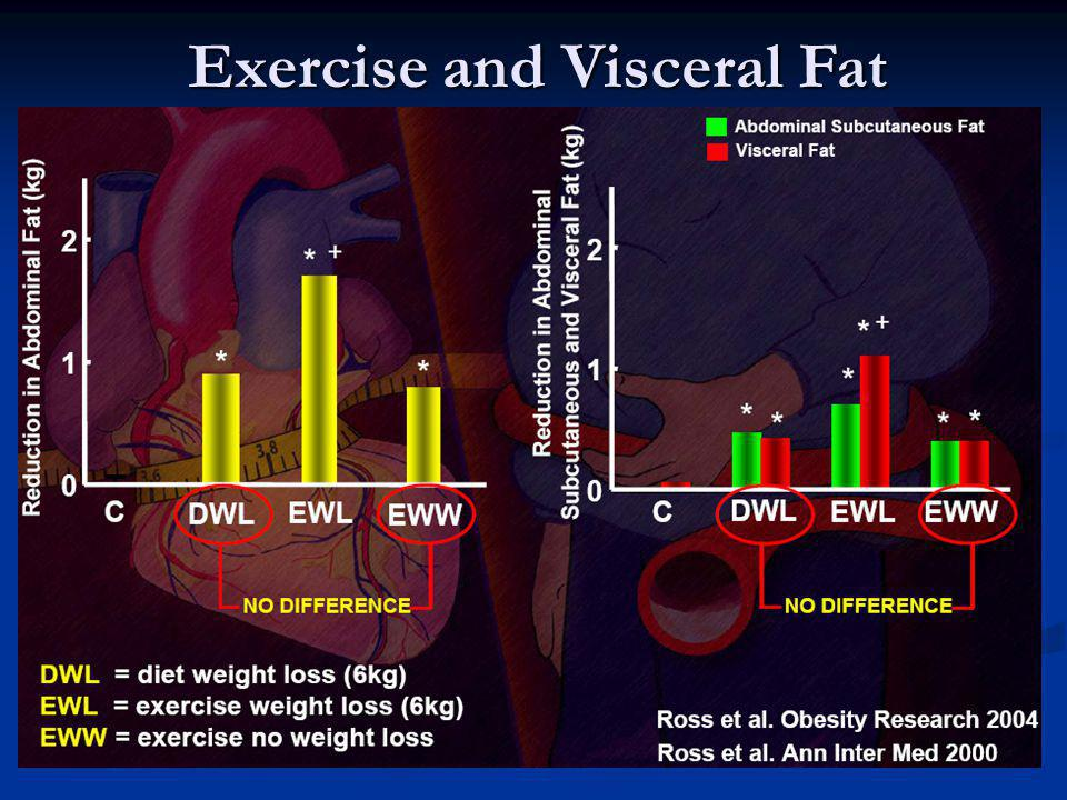 Exercise and Visceral Fat
