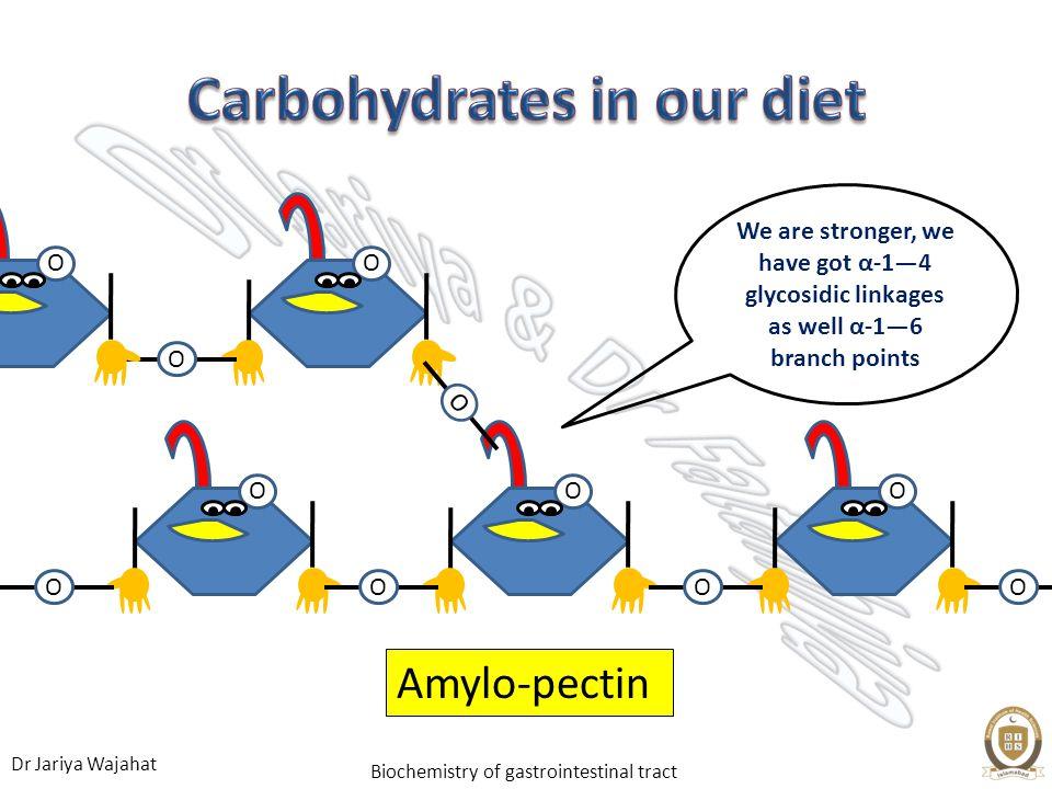 Dr Jariya Wajahat Biochemistry of gastrointestinal tract OO O O OOO Amylo-pectin O O O O We are stronger, we have got α-14 glycosidic linkages as well