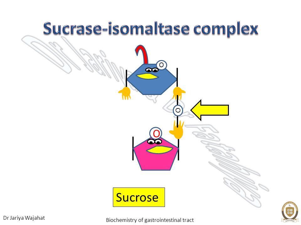 Dr Jariya Wajahat Biochemistry of gastrointestinal tract O O O Sucrose