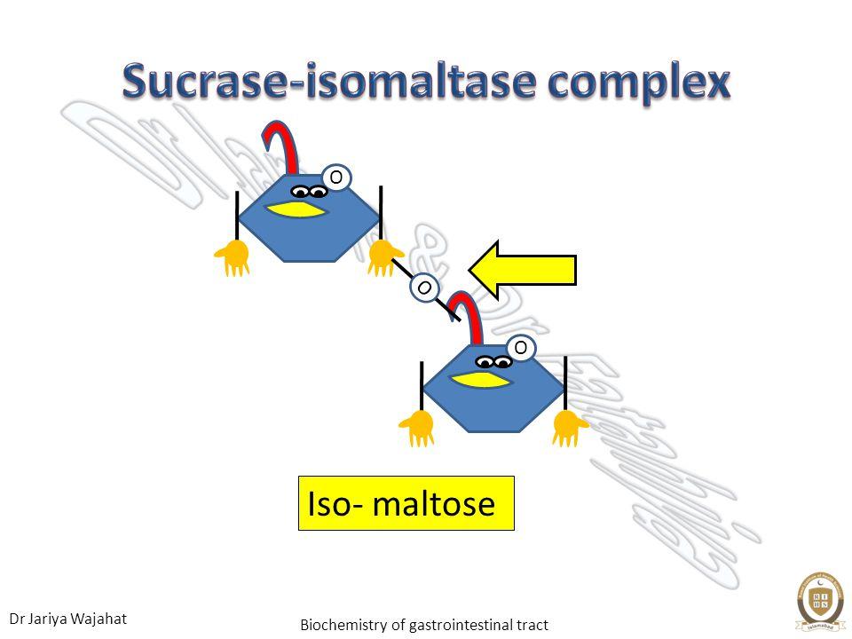 Dr Jariya Wajahat Biochemistry of gastrointestinal tract Iso- maltose OO O