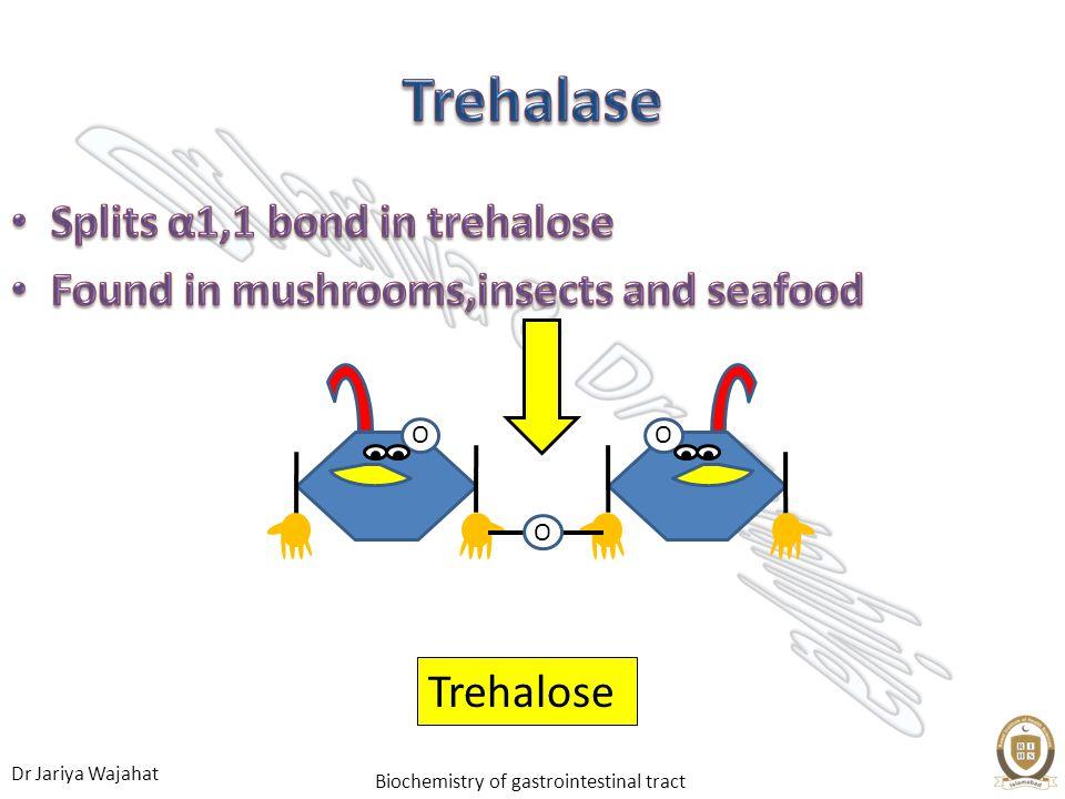 Dr Jariya Wajahat Biochemistry of gastrointestinal tract Splits α1,1 bond in trehalose Splits α1,1 bond in trehalose Found in mushrooms,insects and se