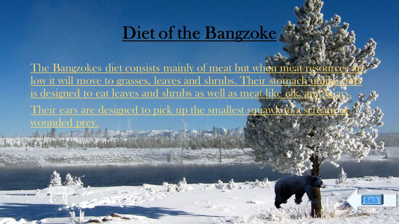 Life cycle Diet Pack life Howl Food chain Geography Speed Bibliography The Bangzoke The deadliest animal on earth.