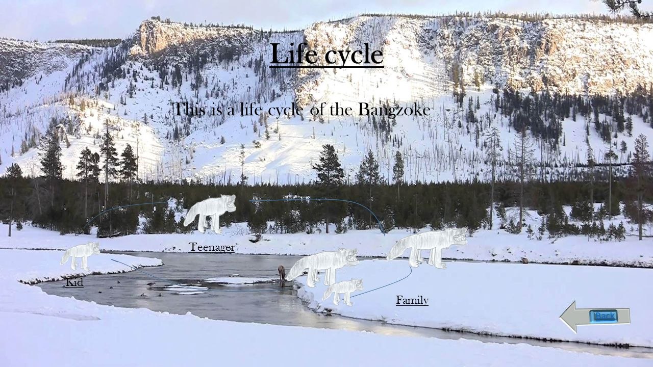 Life cycle This is a life cycle of the Bangzoke Kid Teenager Family