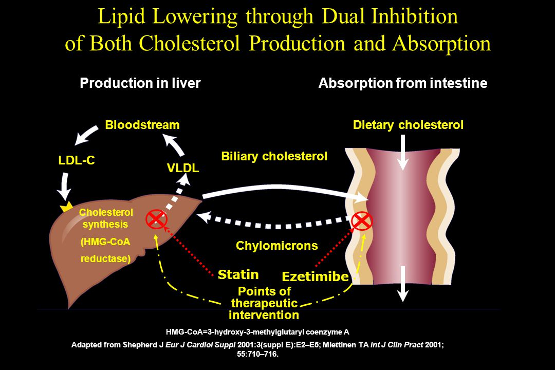 Lipid Lowering through Dual Inhibition of Both Cholesterol Production and Absorption HMG-CoA=3-hydroxy-3-methylglutaryl coenzyme A Adapted from Shephe
