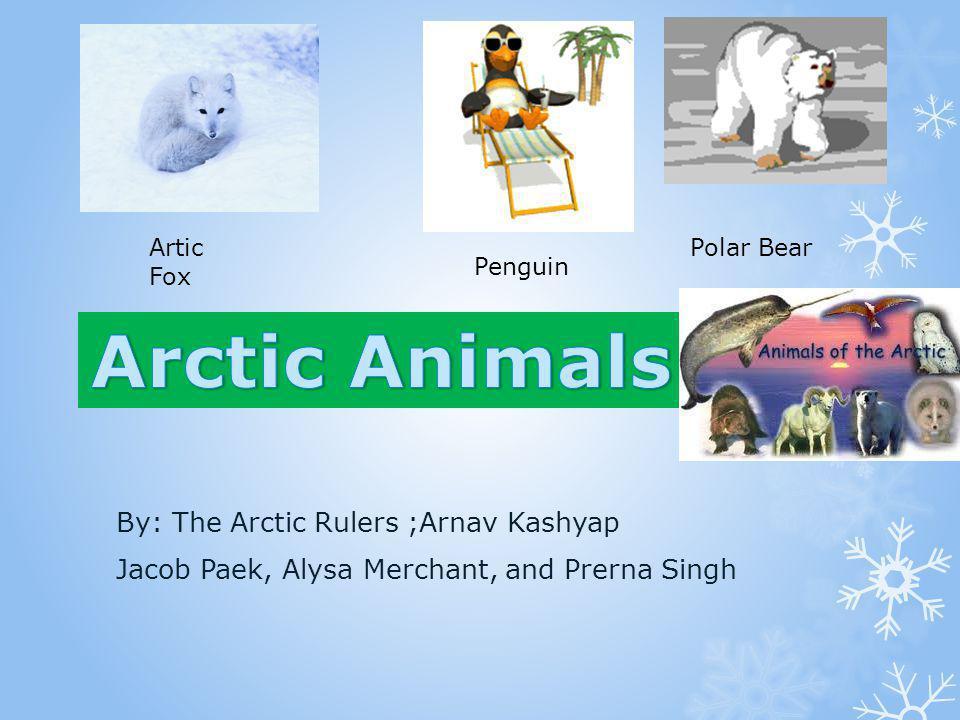 Arctic Animals By: The Arctic Rulers ;Arnav Kashyap Jacob Paek, Alysa Merchant, and Prerna Singh Artic Fox Penguin Polar Bear