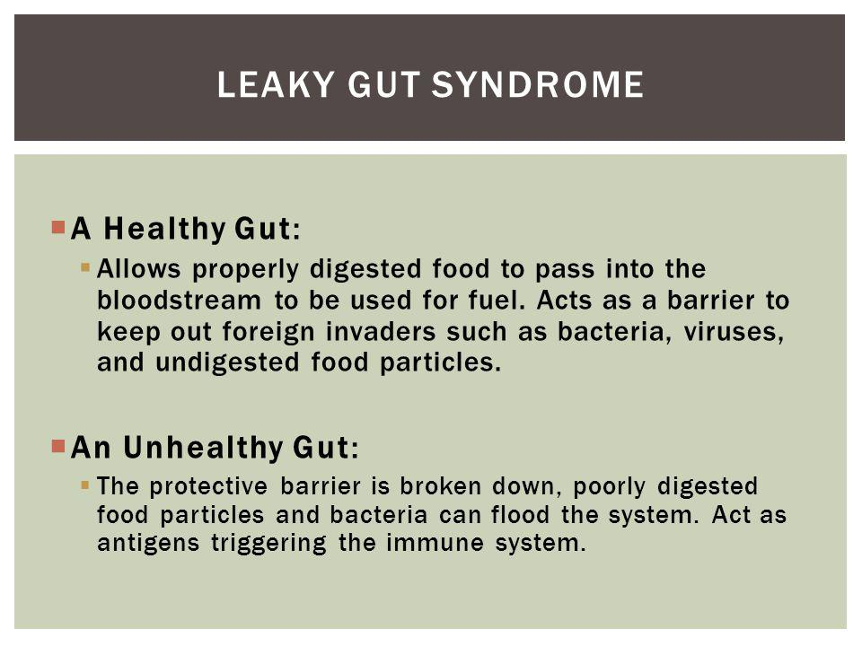 A Healthy Gut: Allows properly digested food to pass into the bloodstream to be used for fuel.