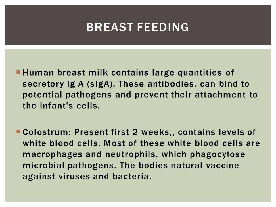 Human breast milk contains large quantities of secretory Ig A (sIgA).