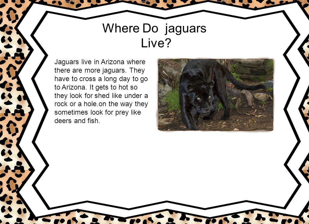 Do Have Predators? There predators are croccodiles and elephants and big animals.