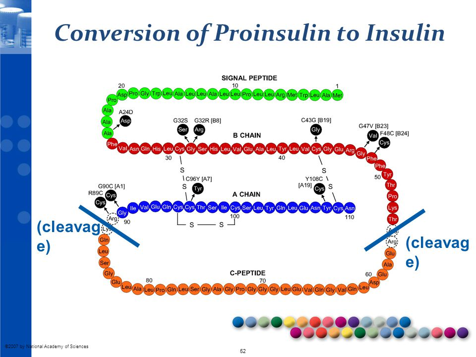 © 2010 52 ©2007 by National Academy of Sciences Conversion of Proinsulin to Insulin (cleavag e)
