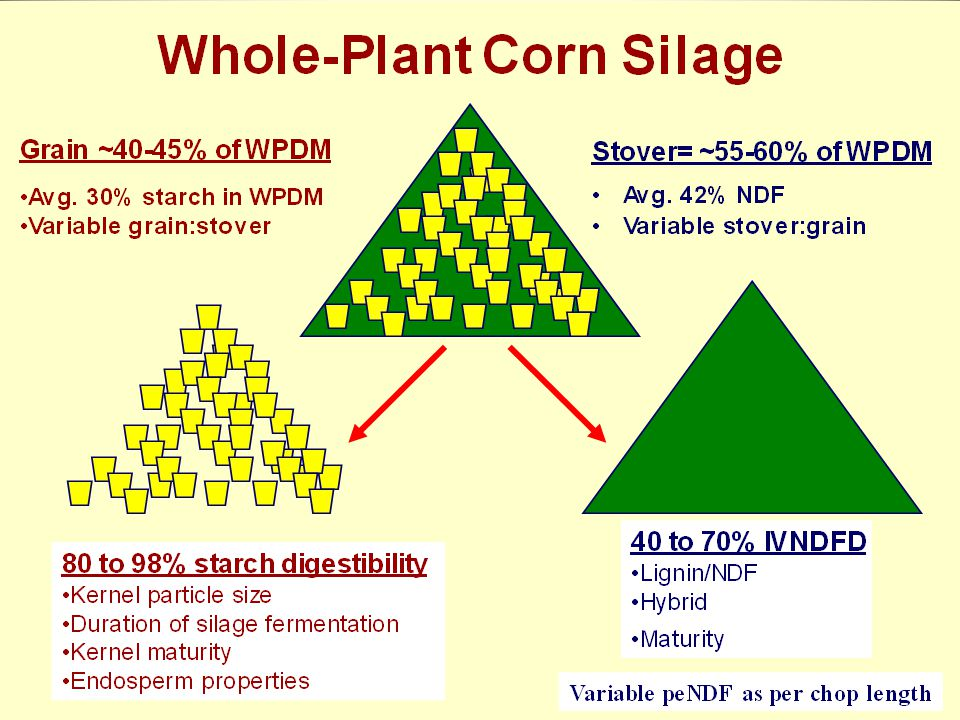 Corn Silage Harvest Practices Meta Analysis Corn Silage Harvest Practices Meta Analysis Ferraretto & Shaver, PAS 2012 106 treatment means – 27 studies – 24 articles January 2000 to July 2011 (AFST, JDS) Lactating dairy cows fed TMR, starch digestibility (in vivo) Proc Mixed (SAS, 2004) Fixed effects: treatment and covariance factors Random effect: study Weighted by cow (St-Pierre, 2001)