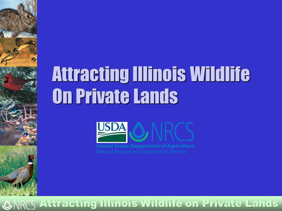 Attracting Illinois Wildlife On Private Lands