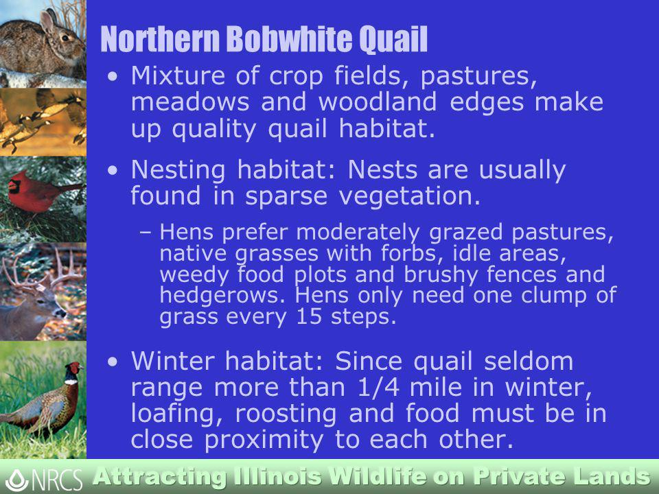 Northern Bobwhite Quail Mixture of crop fields, pastures, meadows and woodland edges make up quality quail habitat.