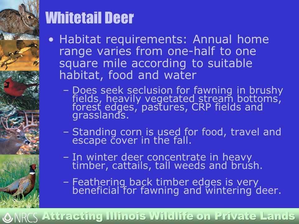 Whitetail Deer Habitat requirements: Annual home range varies from one-half to one square mile according to suitable habitat, food and water –Does seek seclusion for fawning in brushy fields, heavily vegetated stream bottoms, forest edges, pastures, CRP fields and grasslands.