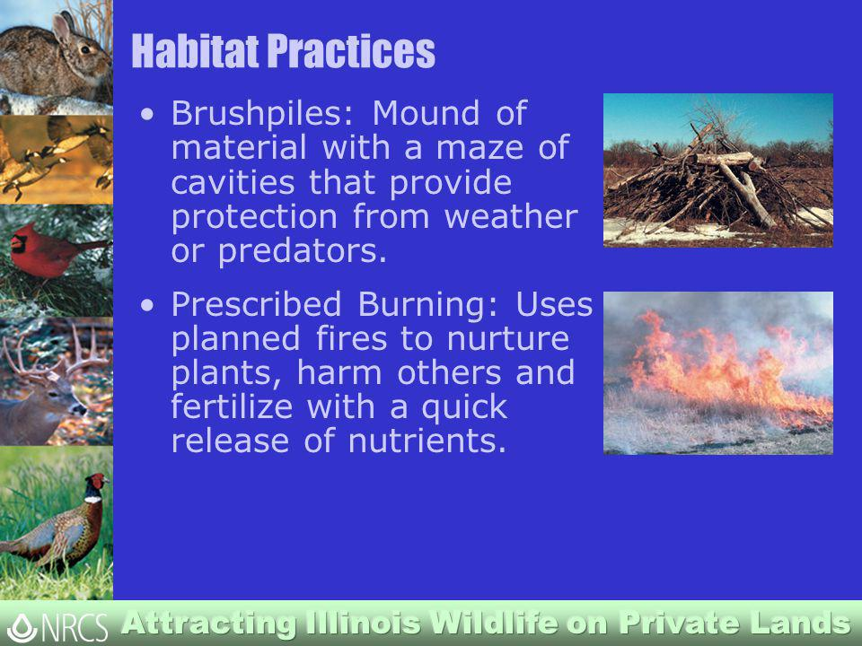 Habitat Practices Brushpiles: Mound of material with a maze of cavities that provide protection from weather or predators.