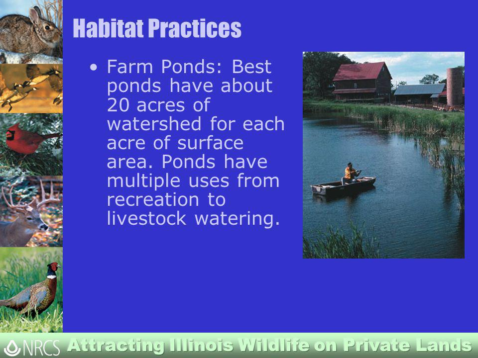 Habitat Practices Farm Ponds: Best ponds have about 20 acres of watershed for each acre of surface area.