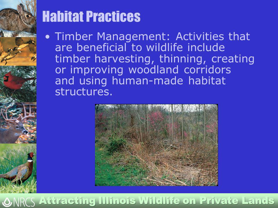 Habitat Practices Timber Management: Activities that are beneficial to wildlife include timber harvesting, thinning, creating or improving woodland corridors and using human-made habitat structures.