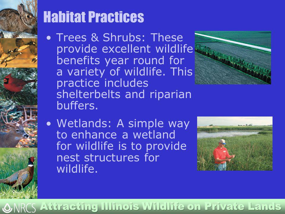 Habitat Practices Trees & Shrubs: These provide excellent wildlife benefits year round for a variety of wildlife.