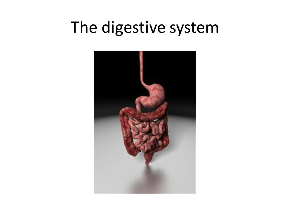 Symptoms of a poor digestion Bloating and burping Flatulence and wind Fatigue especially in the morning Weight increase or an inability to put weight on Growth issues and pains Brain function issues and learning Constipation and diarrhoea Eczema and other skin issues and dandruff Dehydration Cramping and irritable bowel Colic and reflux Joint pains and stiffness