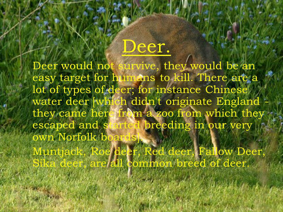Deers Deer. Deer would not survive, they would be an easy target f or humans to kill.