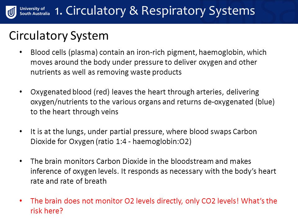 1. Circulatory & Respiratory Systems Blood cells (plasma) contain an iron-rich pigment, haemoglobin, which moves around the body under pressure to del