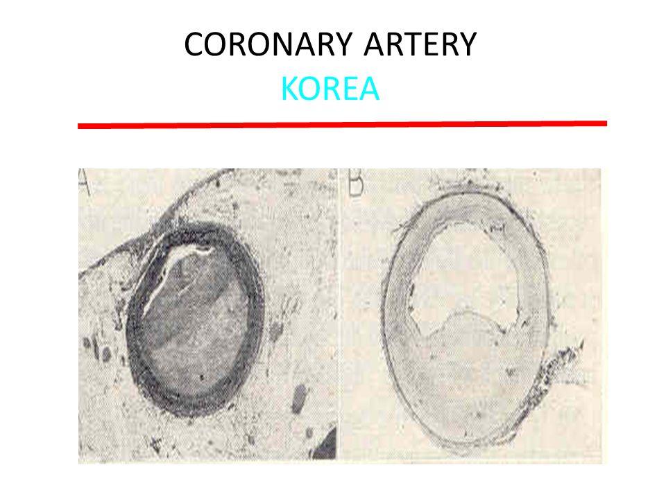 CORONARY ARTERY KOREA Enos et al: JAMA 158:912, 1955 LAD 22yo White LAD 22yo Japanese