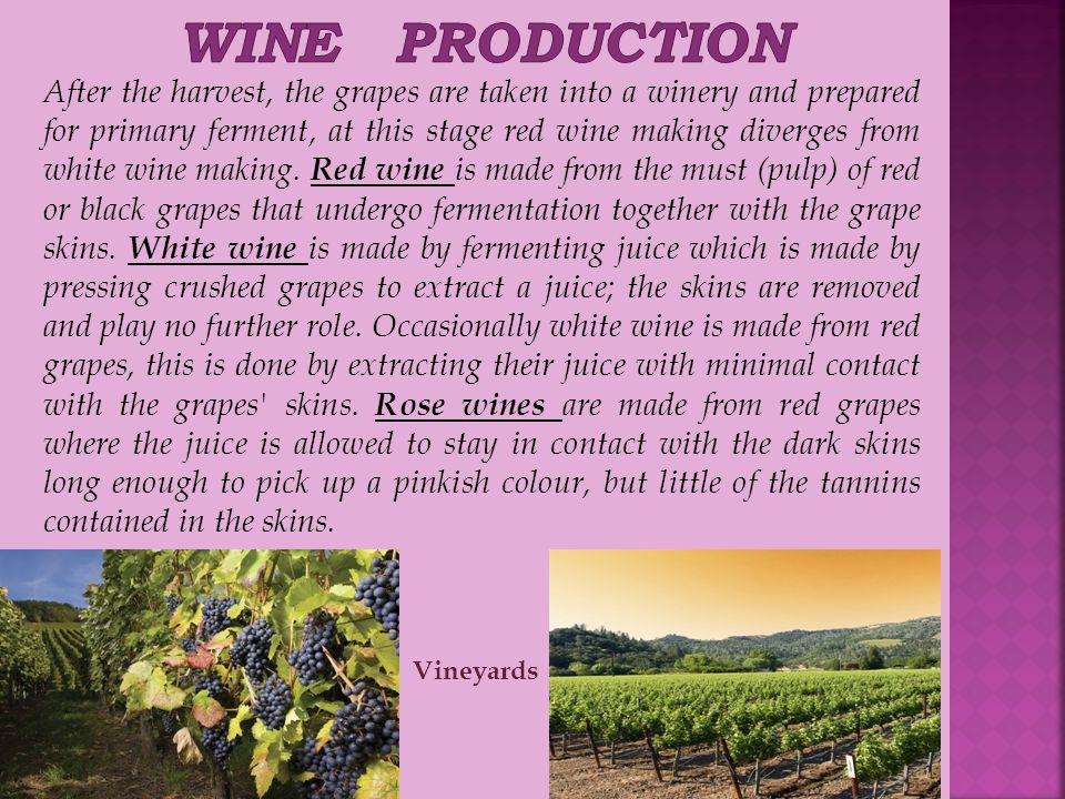 After the harvest, the grapes are taken into a winery and prepared for primary ferment, at this stage red wine making diverges from white wine making.