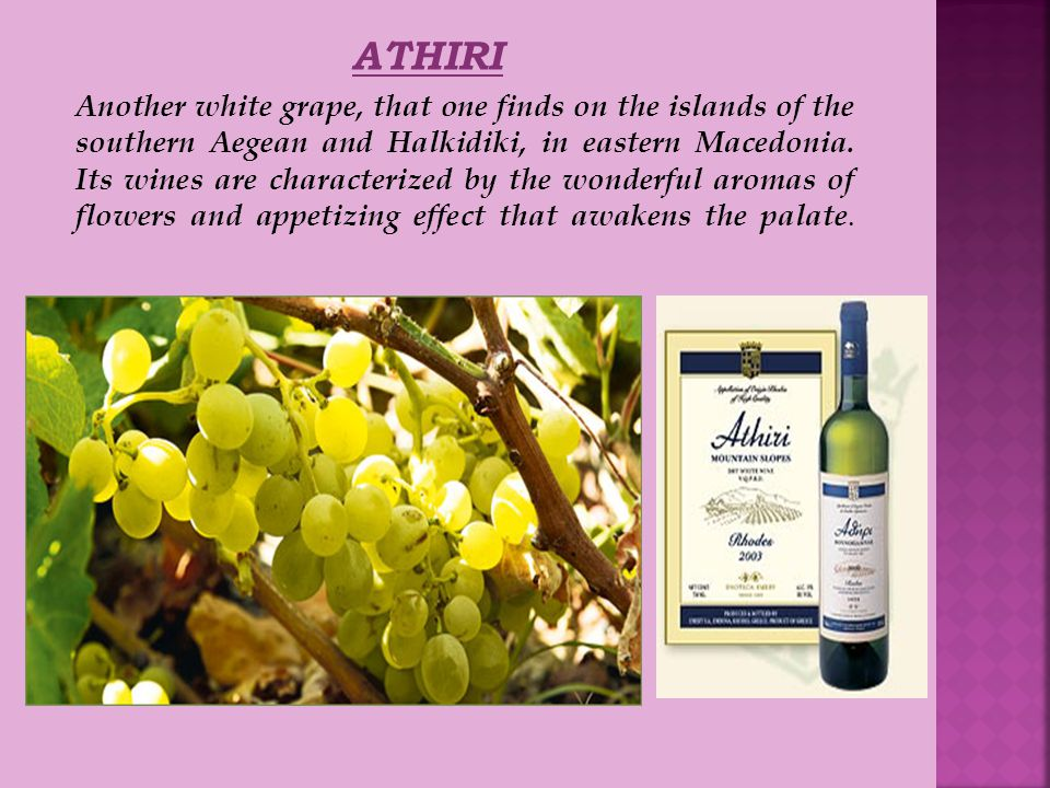 ATHIRI Another white grape, that one finds on the islands of the southern Aegean and Halkidiki, in eastern Macedonia.