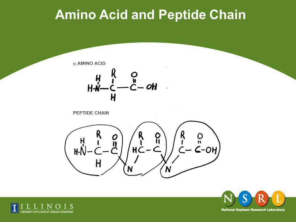 Amino Acid and Peptide Chain Oil 18% Soluble Carbohydrate 15%