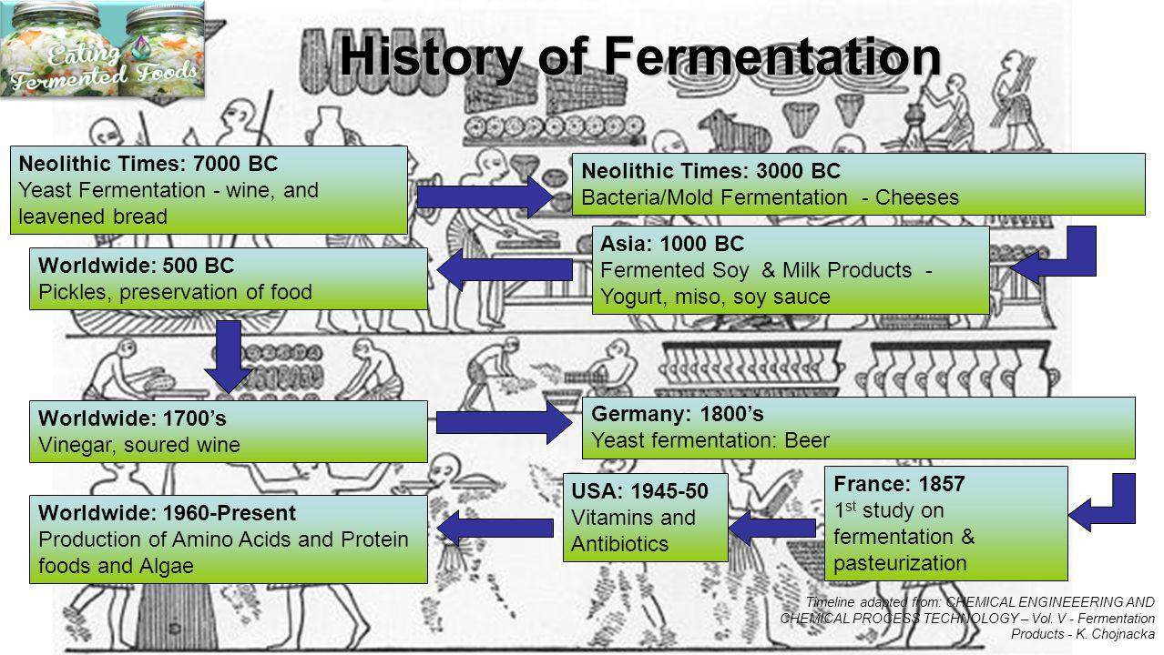 History of Fermentation Neolithic Times: 7000 BC Yeast Fermentation - wine, and leavened bread Neolithic Times: 3000 BC Bacteria/Mold Fermentation - C