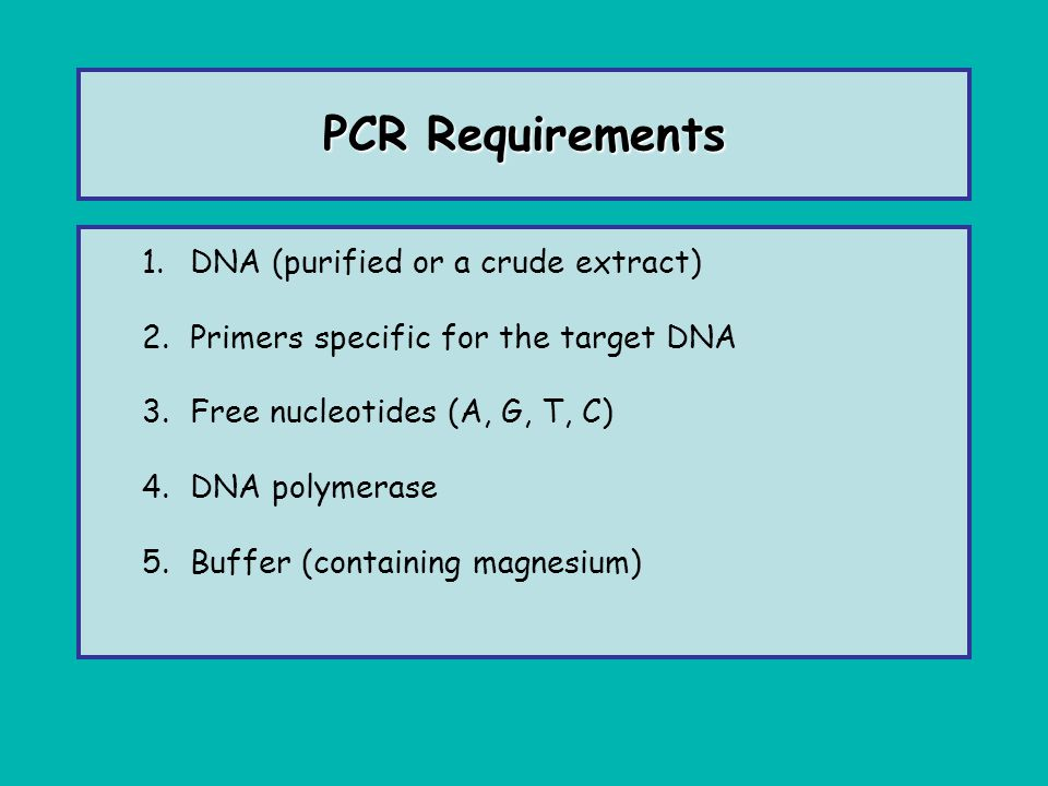 PCR Primers Usually about 18-26 nucleotides in length Designed to flank the region to be amplified GC content between 50-60 o C Melting point determined by G-C and A-T content –T m = 4 o C (G+C) + 2 o C (A+T) –Ex: a primer with 10 G/C and 10 A/T would have a T m of 60 o C 4(10) + 2(10)= 60 o C Tm of both primers within 2 o C Avoid hairpin, dimer and self dimer