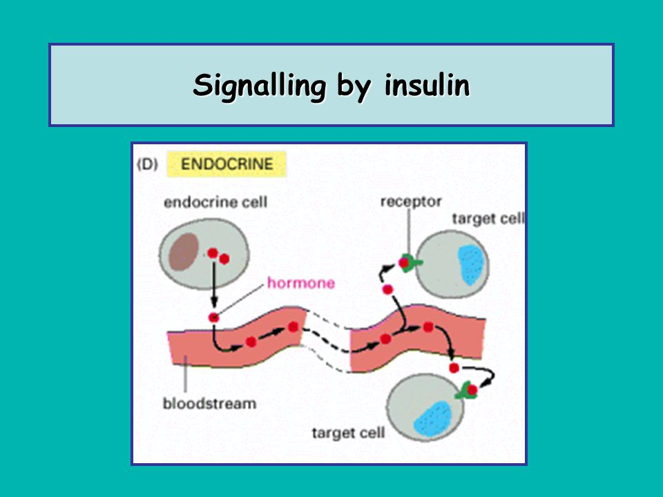 What happens in the absence of Insulin .
