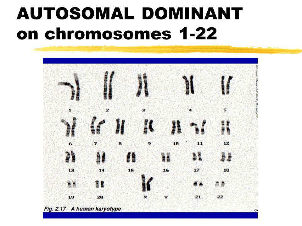 AUTOSOMAL DOMINANT on chromosomes 1-22